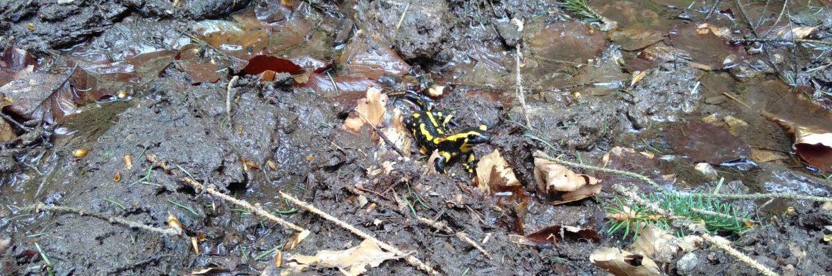 Schwarz-gelb im Wald
